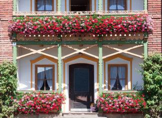 Ogródek na balkonie – to możliwe!