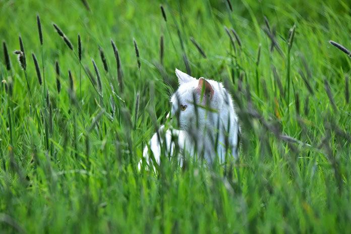 Łąka kwietna – przepiękny trawnik w stylu naturalnym