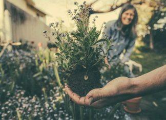 prace w ogrodzie, sadzenie roślin