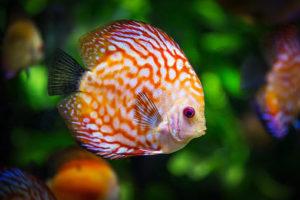 Piękne akwarium. Jak zadbać o rybki?