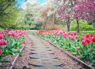 droga w ogrodzie