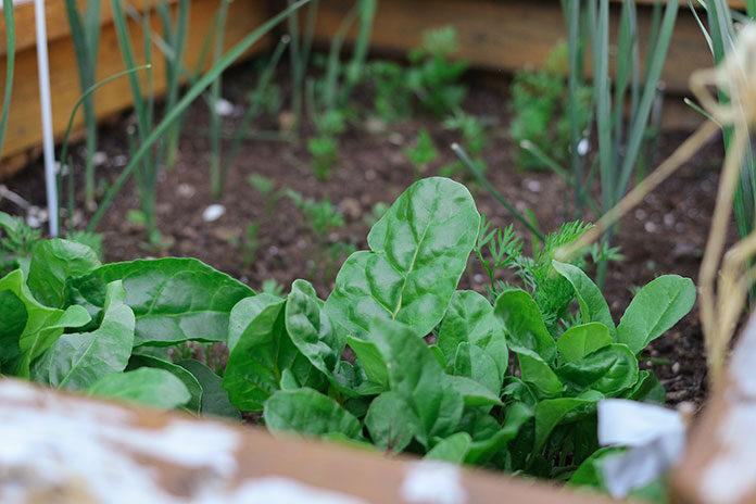 Jak zorganizować przestrzeń w ogrodzie