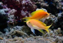 akwarium morskie z koralowcami